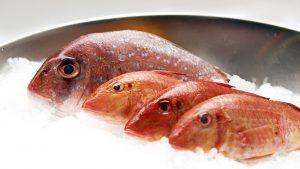 Fisch Schloh GmbH –Frischfisch – 043